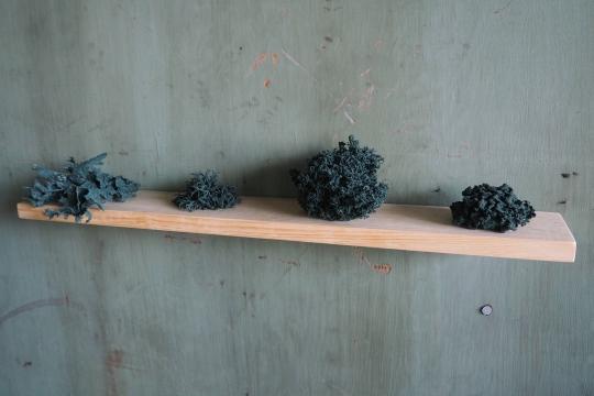Lichens bleu